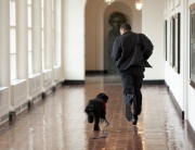 Obama family welcomes new puppy. RESTRICTED