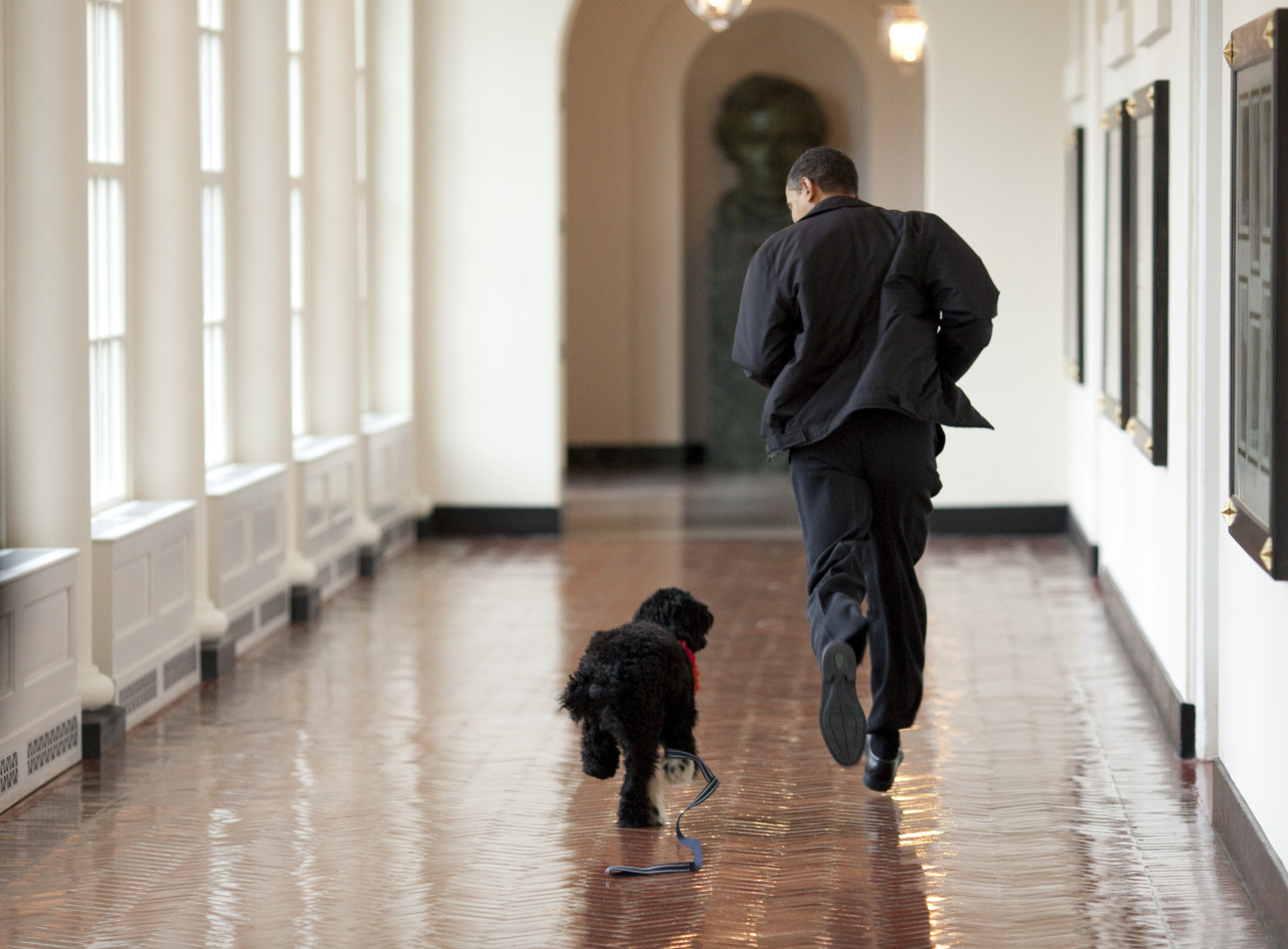 Obama family welcomes new puppy